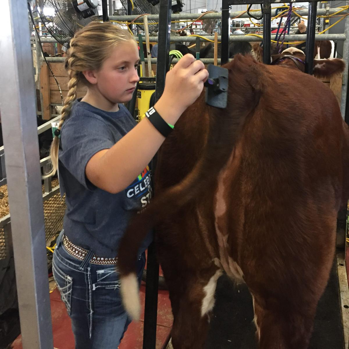 I-80 Livestock 4-H Club of the Month