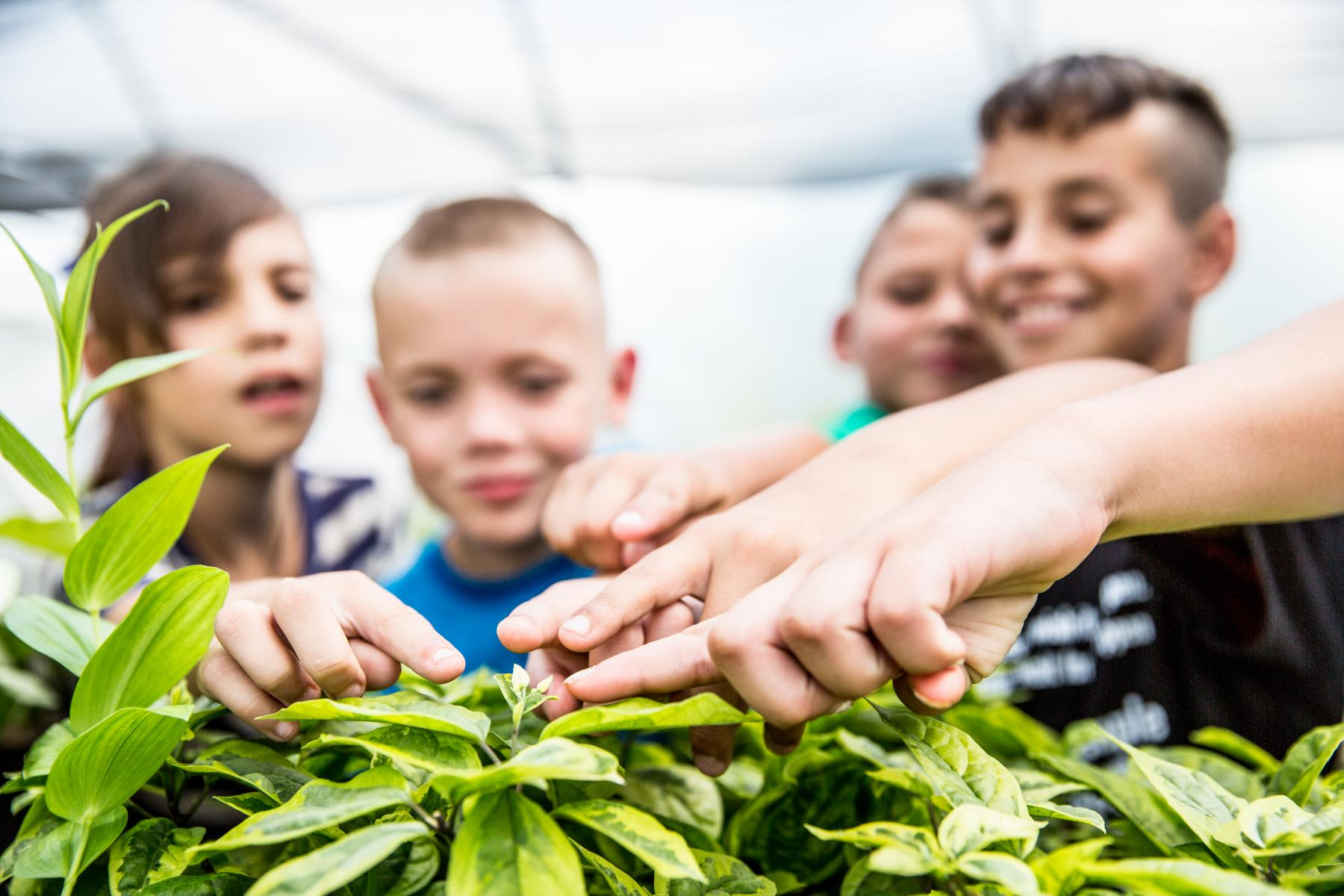 children pointing to the parts of a plant