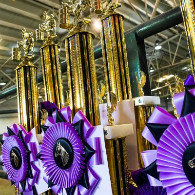 purple rosettes with gold horse figures in the center pinned to tall gold trophies