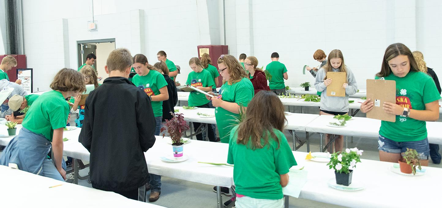 youth participating in a 4-H judging contest at the Nebraska state fair