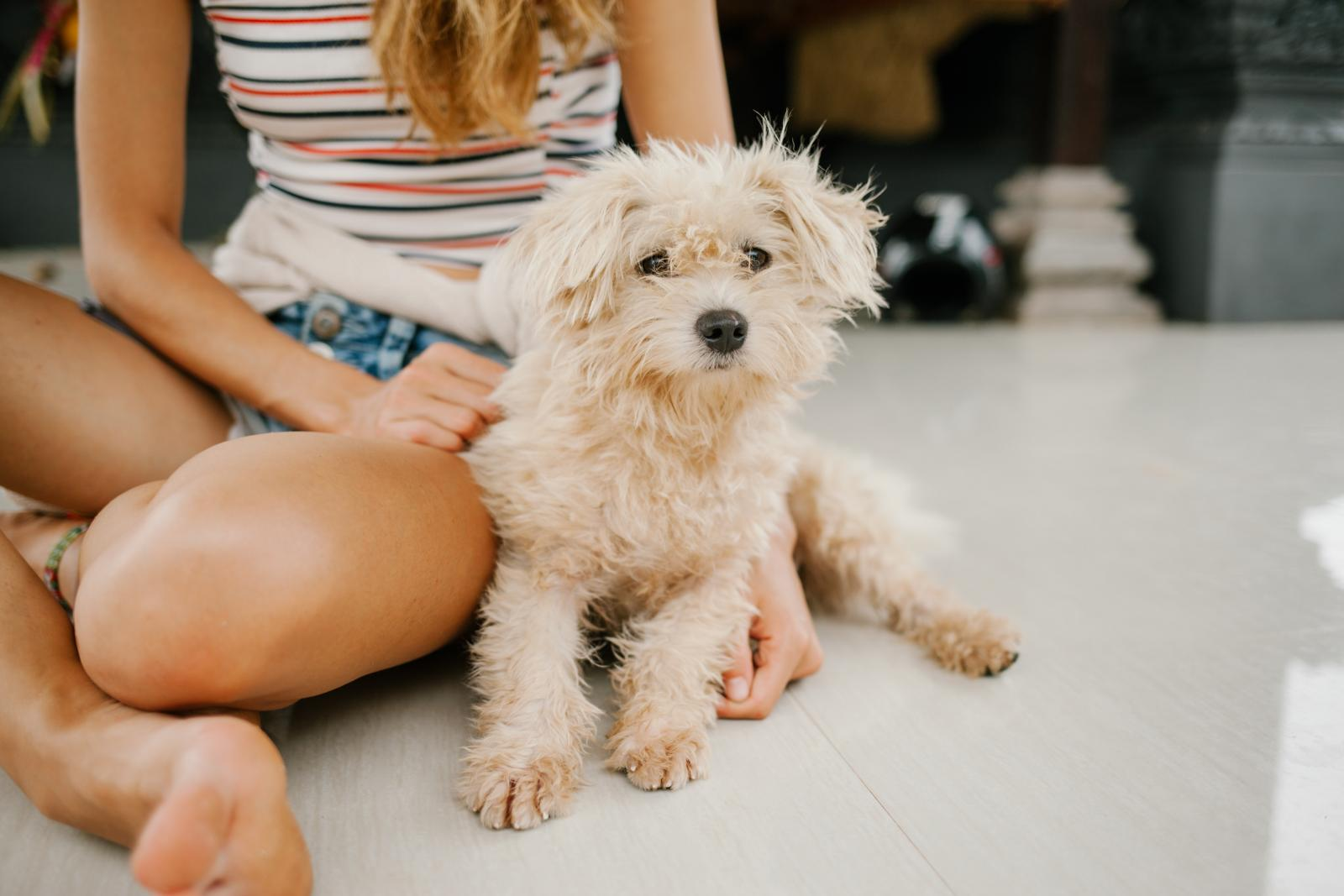 girl sitting with small fluffy dog